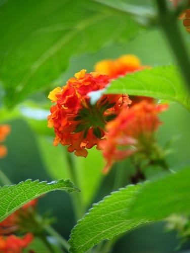 hab ich doch glatt vergessen, wie diese pflanze heißt......