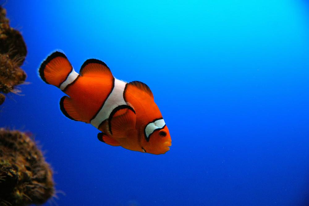 ... hab Nemo gefunden ;-)