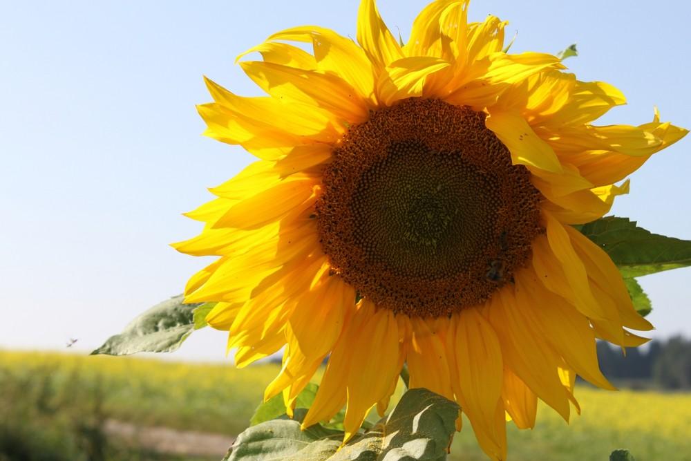 hab Sonne im Herzen
