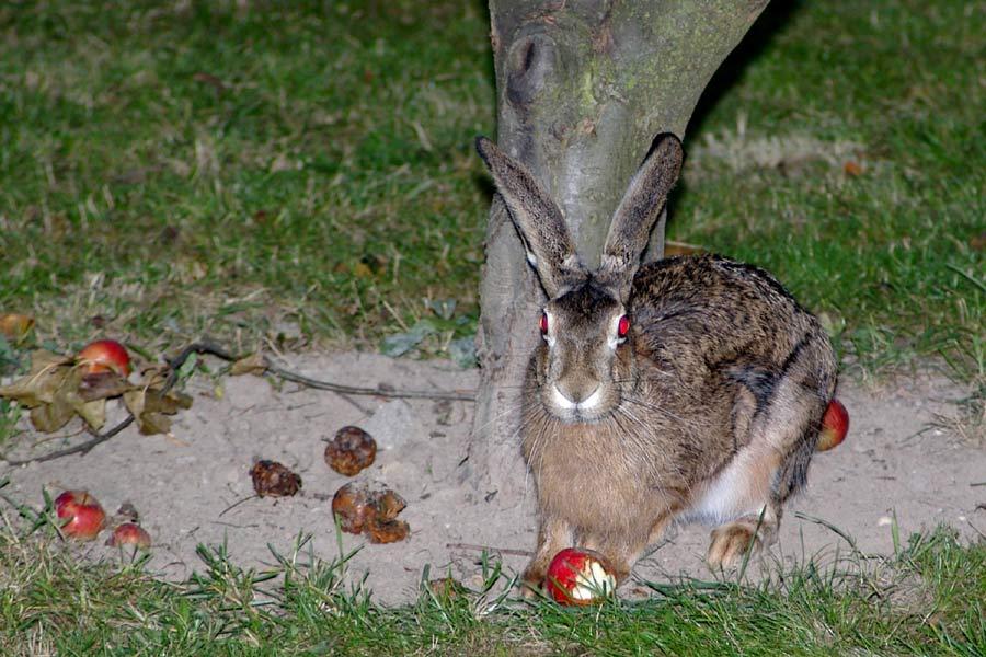 Habe Susi mal wieder beim Apfelessen erwischt