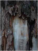 Haben Bäume eine Seele?