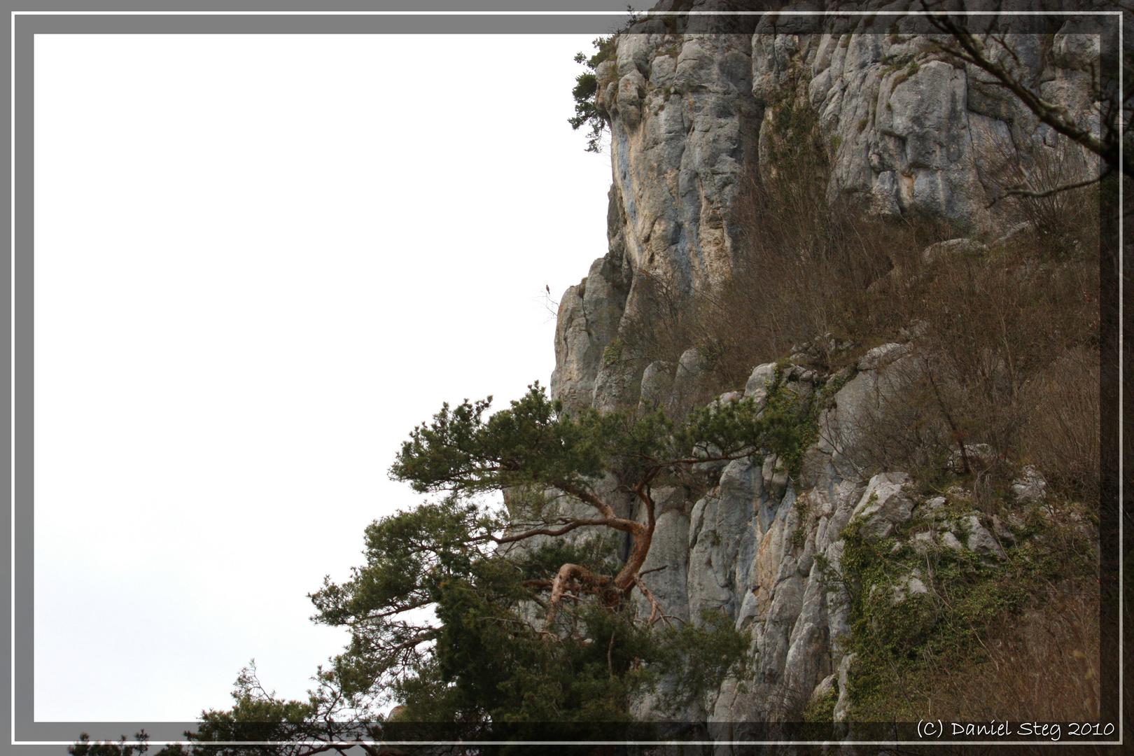 Habitat der Vipera aspis aspis im Jura