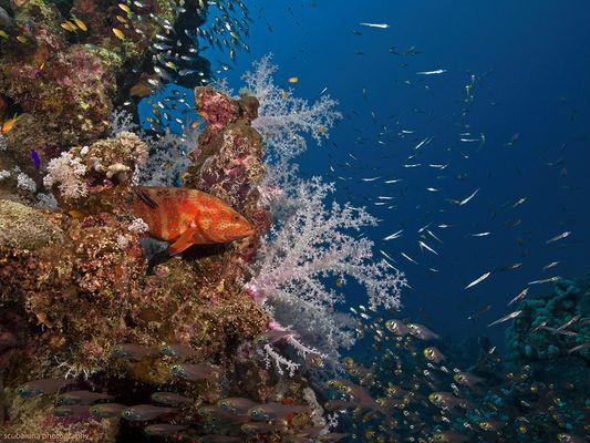 Habitat Red Sea