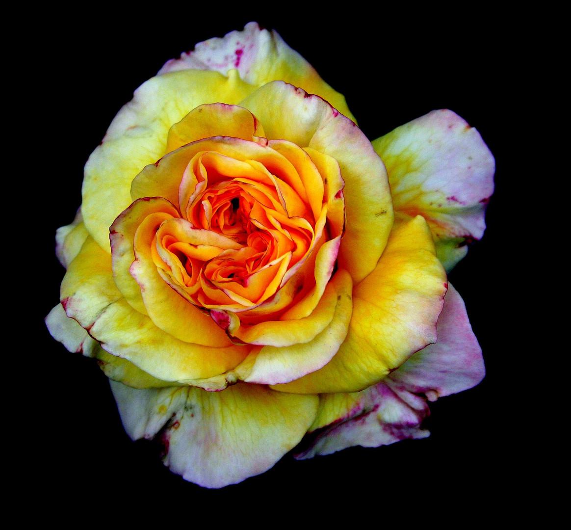 Habla flor........Para Graciela en su cumple