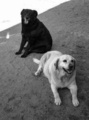 Hace calor!!!! El blanco y el negro
