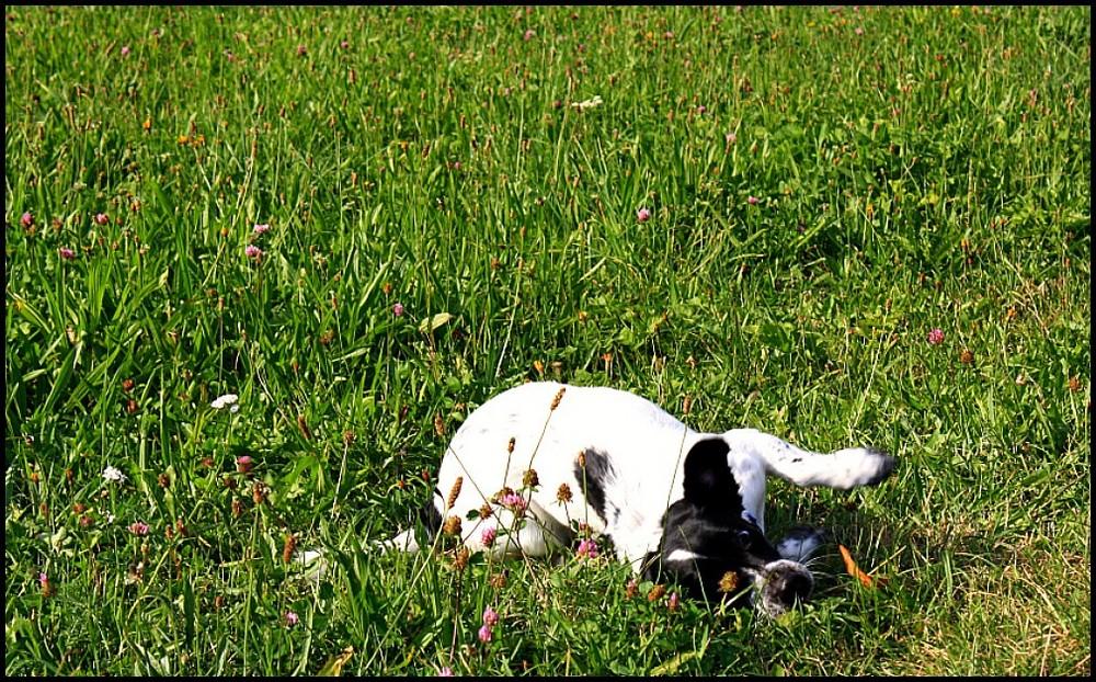 hach schönes Gras
