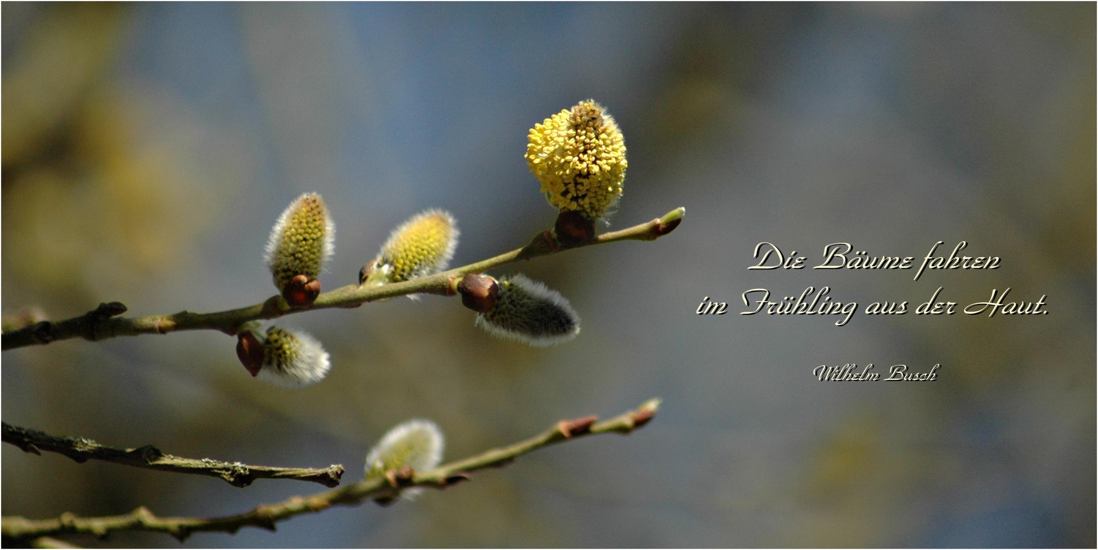 hach was ist dassss...schön, der Frühling ist da :-)))