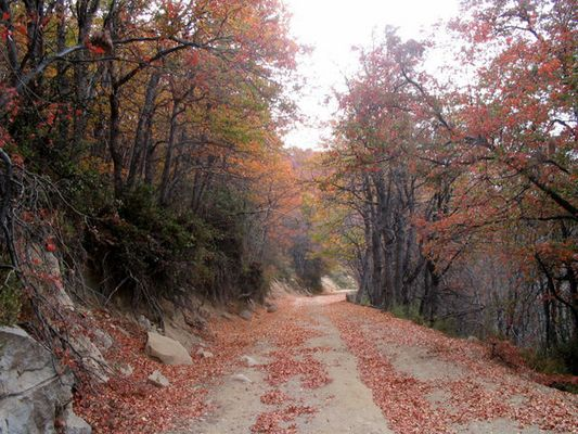 Hacia el Cerro El Roble