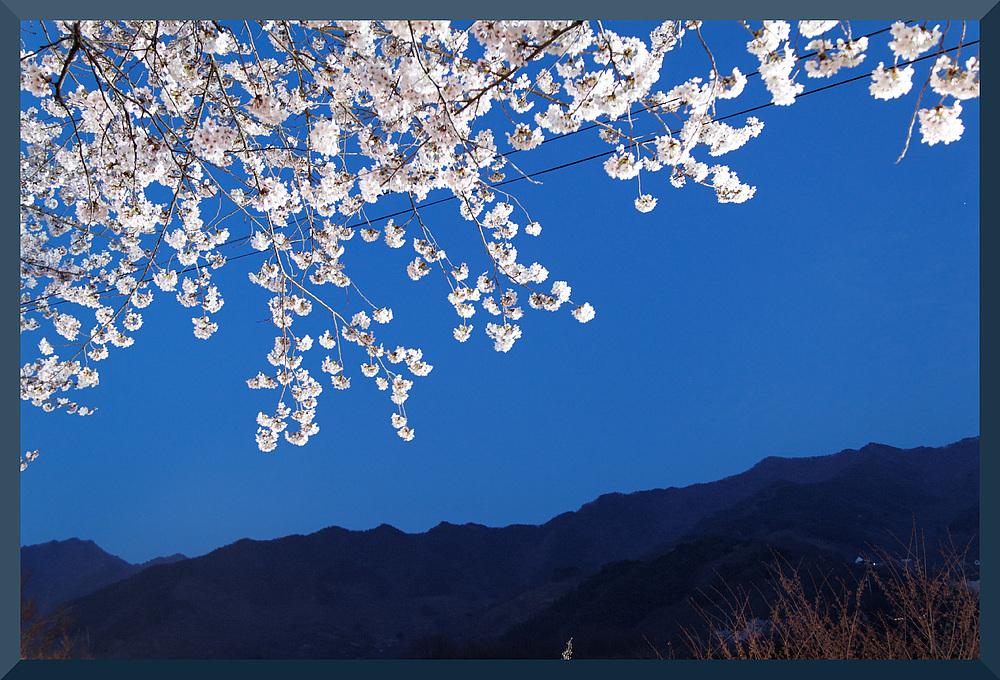 HADONG/Korea - Cherry Blossom IV