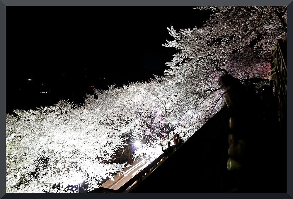 HADONG/Korea - Cherry Blossom VIII