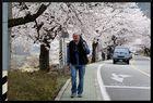 HADONG/Korea - Cherry Blossom XXV