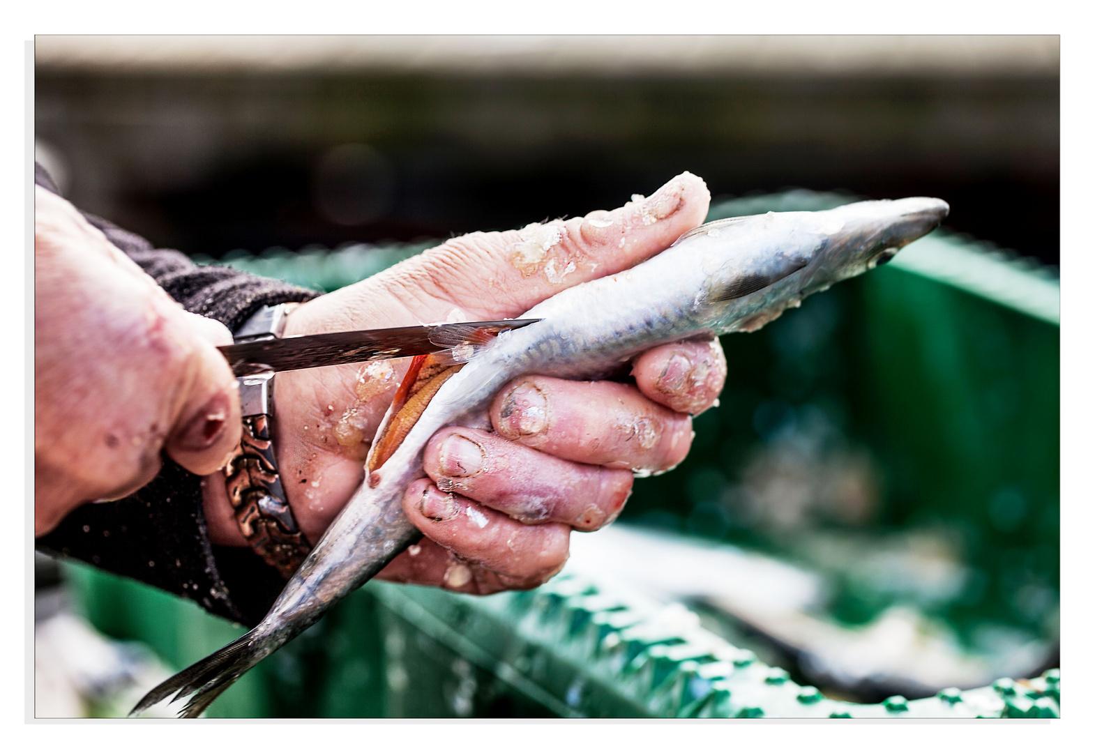 Hände eines Fischer`s