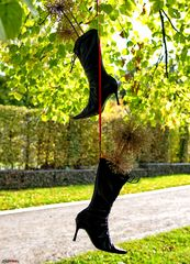 Hängen die Stiefel in den Bäumen ...