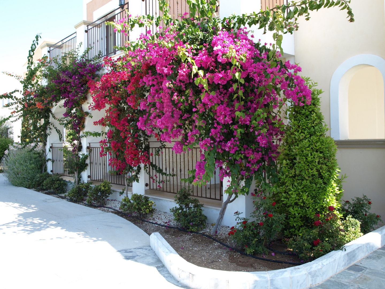 hängende Gärten auf Zypern