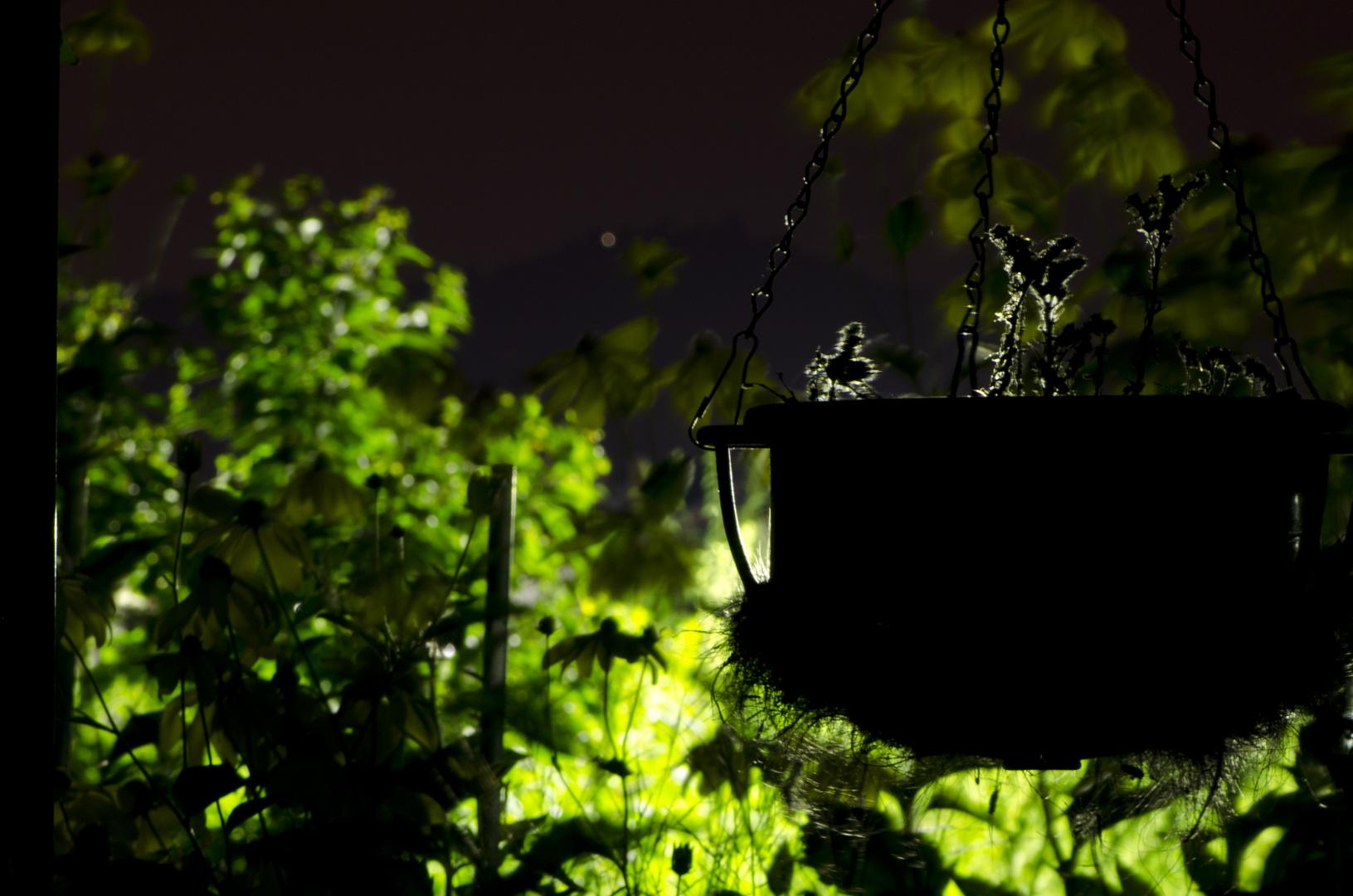 Hängepflanze bei Nacht