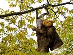 Hängt im Baum die Lederhose ...