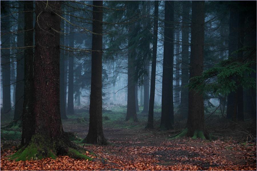 Hänsel und Gretel-Wald