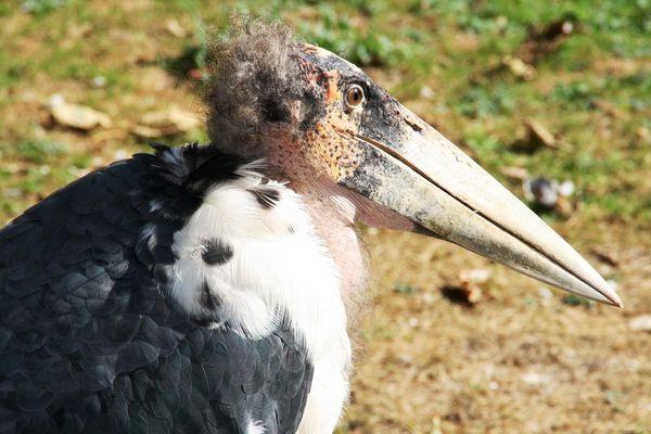 Hässlicher Vogel