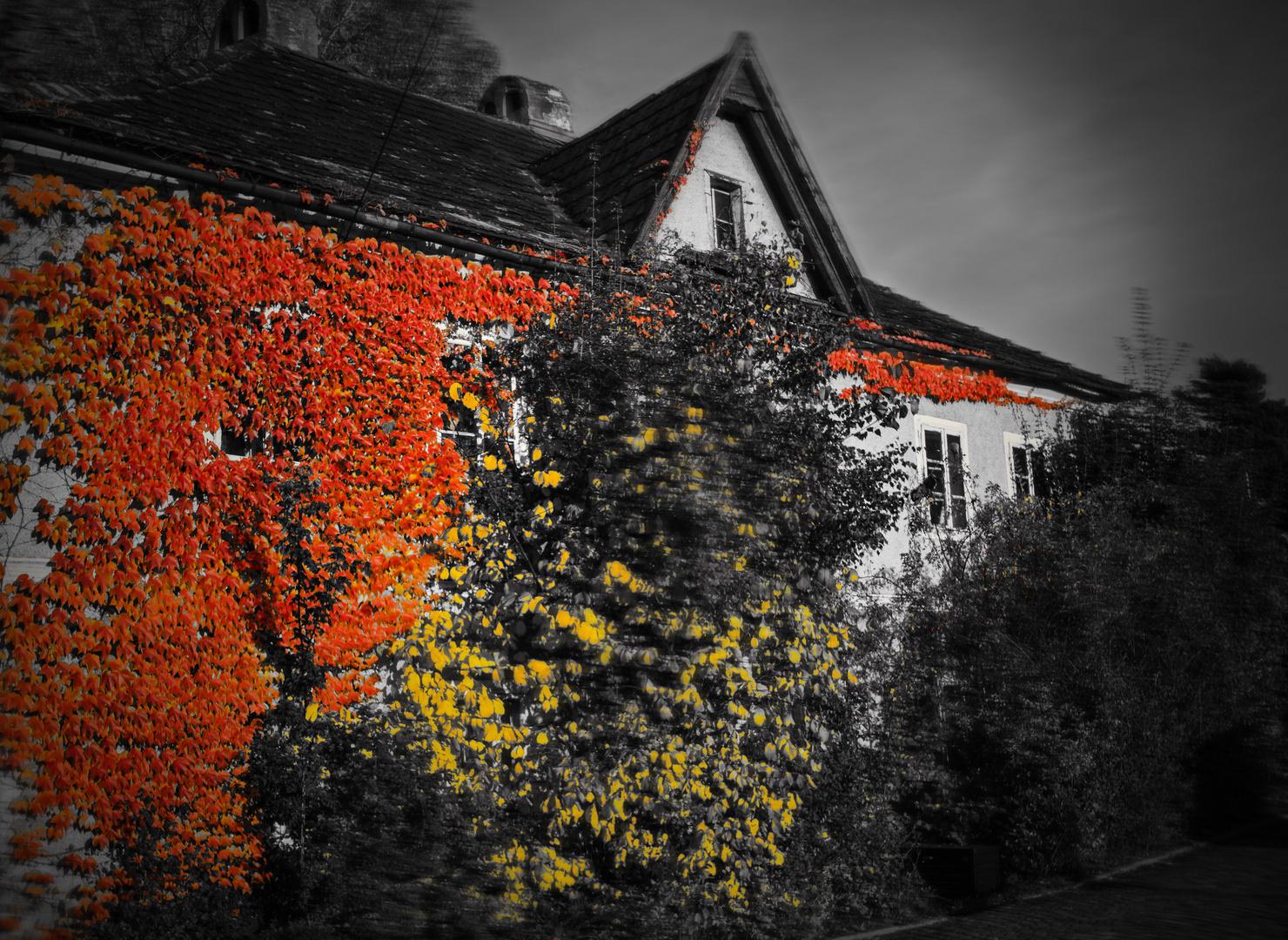 Häuserwald