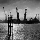 Hafen im Gegenlicht