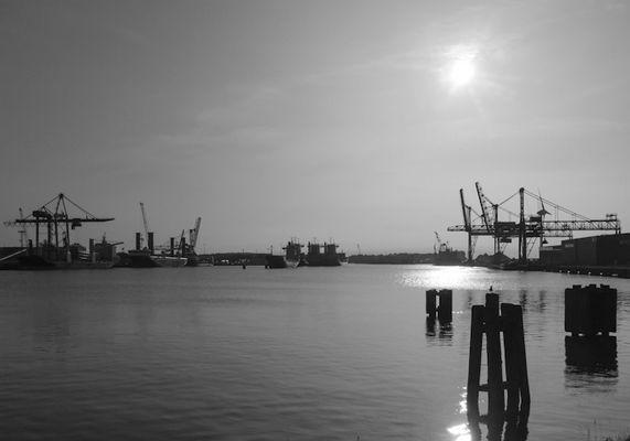 Hafen im Gegenlicht SW