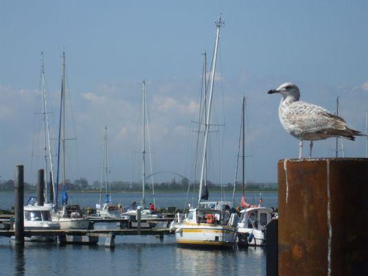 Hafen in Fehmarn