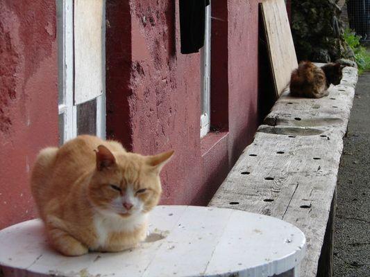 Hafenkatzen