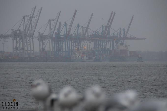 Hafenkräne & Möwe