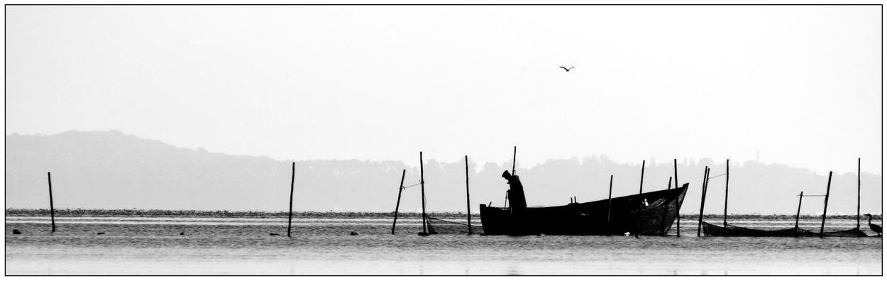 Hafffischer