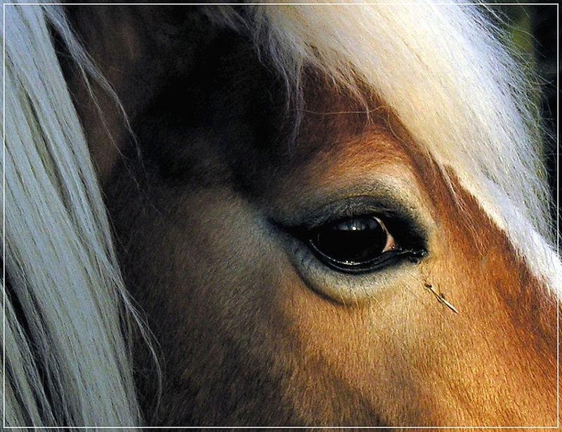 Haffy's Eye
