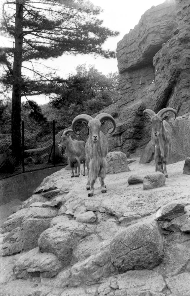 Hagenbeck Mitte der 60ziger
