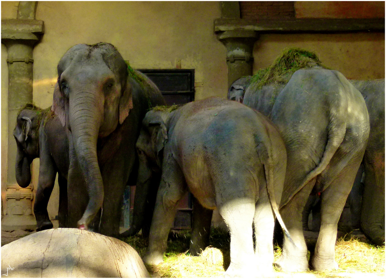 Hagenbecks Elefanten - Familientreffen