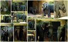 Hagenbecks Elefanten - Treffen vor dem Schlafengehen