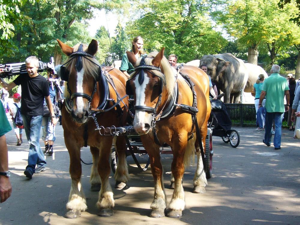 Hagenbeck`s Tierpark