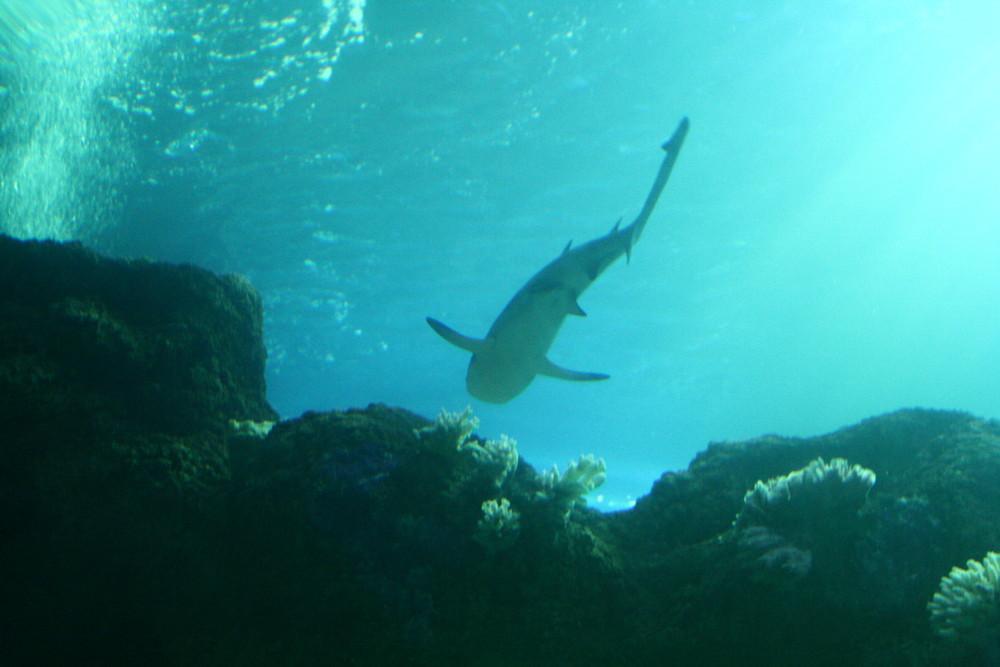 Hai Becken im Saelife Oberhausen