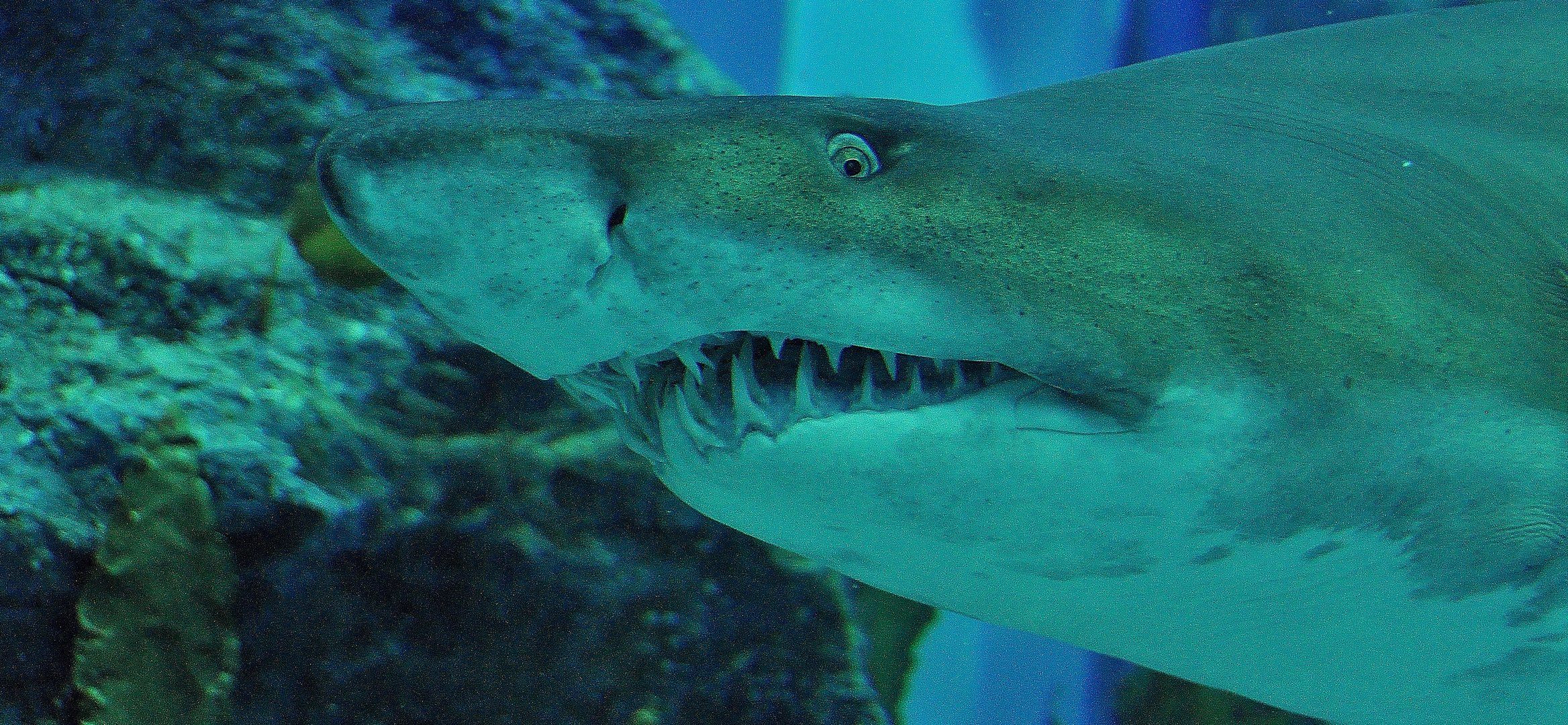 hai-im-dubai-aquarium-2f5054bc-6e2c-46cb-8adf-7e751ef82d0c Luxe De Gravier Aquarium Des Idées