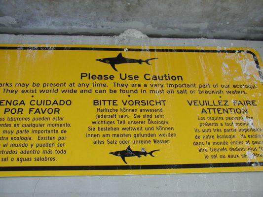 Hai-Warnung oder lachmuskeltraining dank Googles Hilfe