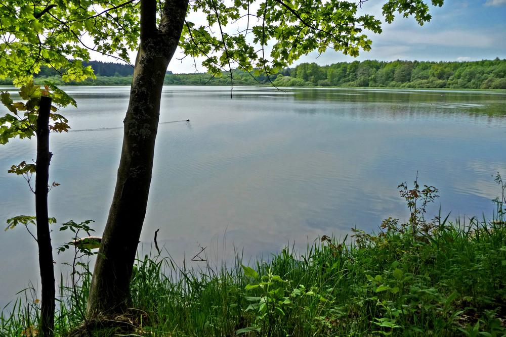 Haiden Weiher (Dreifelder Weiher Gebiet Westerwald)