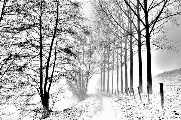 Halage sous la neige