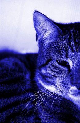 halb-blau