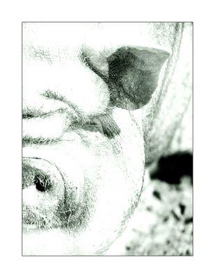 halbes schwein
