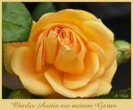 """Halboffene """"Charles Austin"""" - aus meinem Garten"""