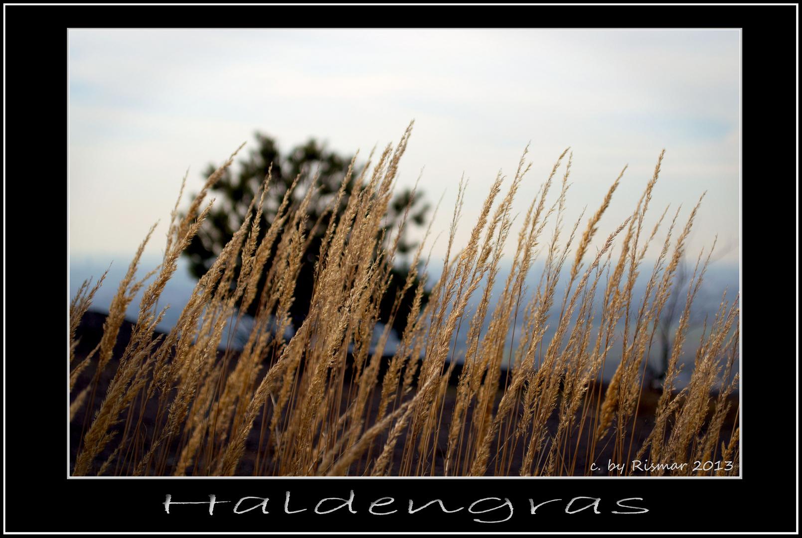 Haldengras