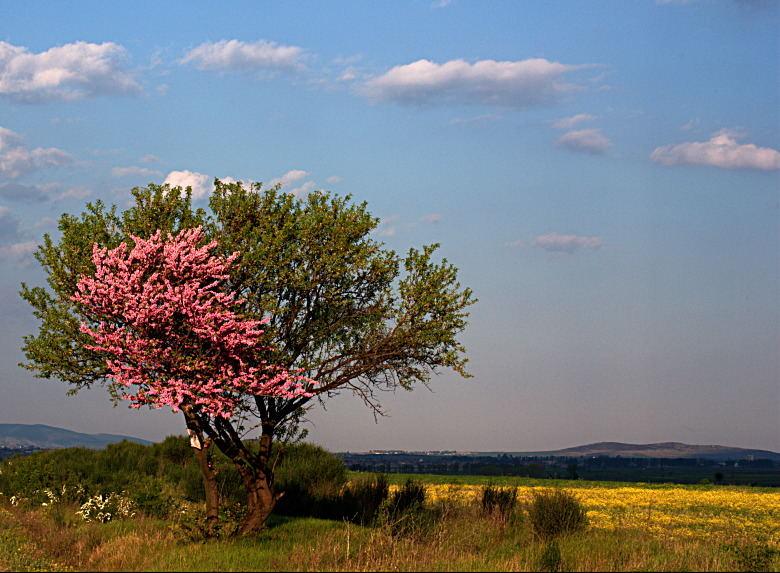 half-blossom