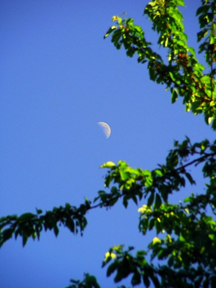 { half-moon }