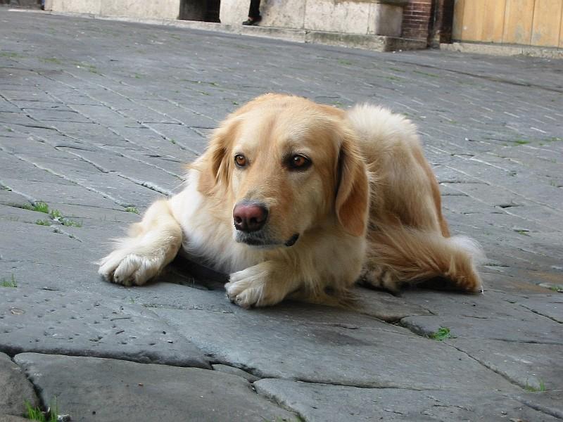 Halla in Siena