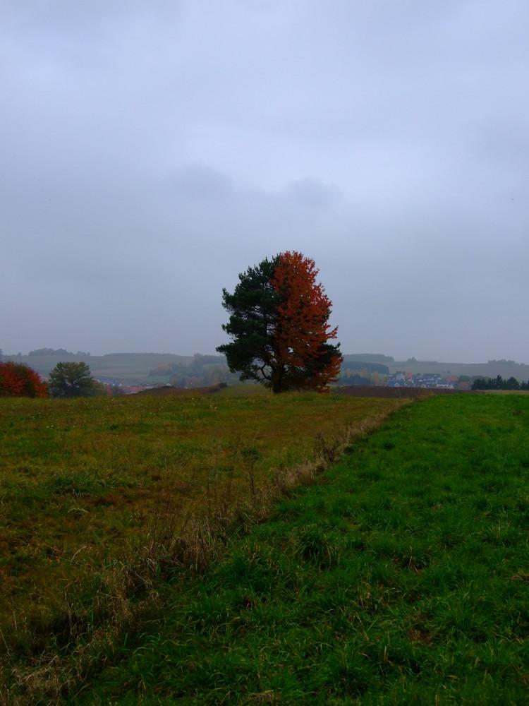 Hallertauer Herbstspaziergang II