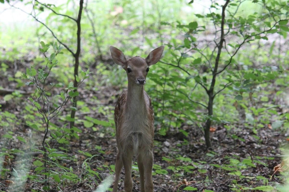 ...Hallo Bambi...