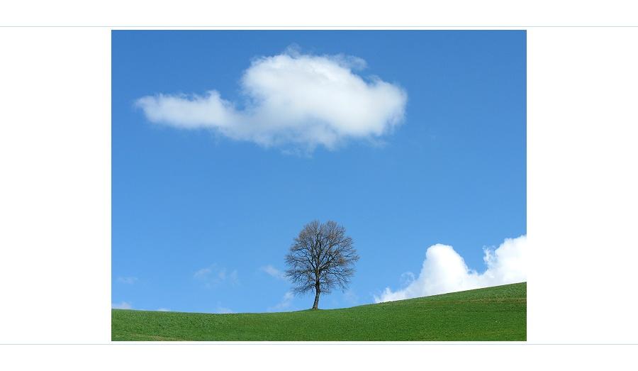 """""""Hallo Baum, wie gehts?"""" - """"Gut liebe Wolke! Schick einzig etwas Regen damit der Frühling beginnt."""""""