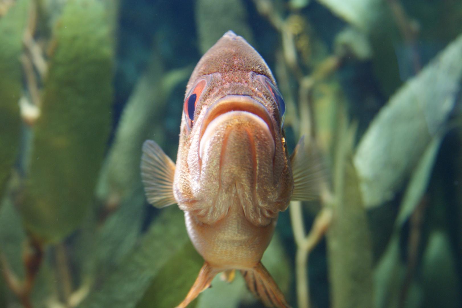 Hallo Fisch